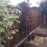 New Fence installed in Dogsthorpe